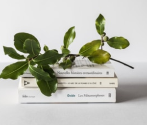 Photo of a stack of white books with a leaf